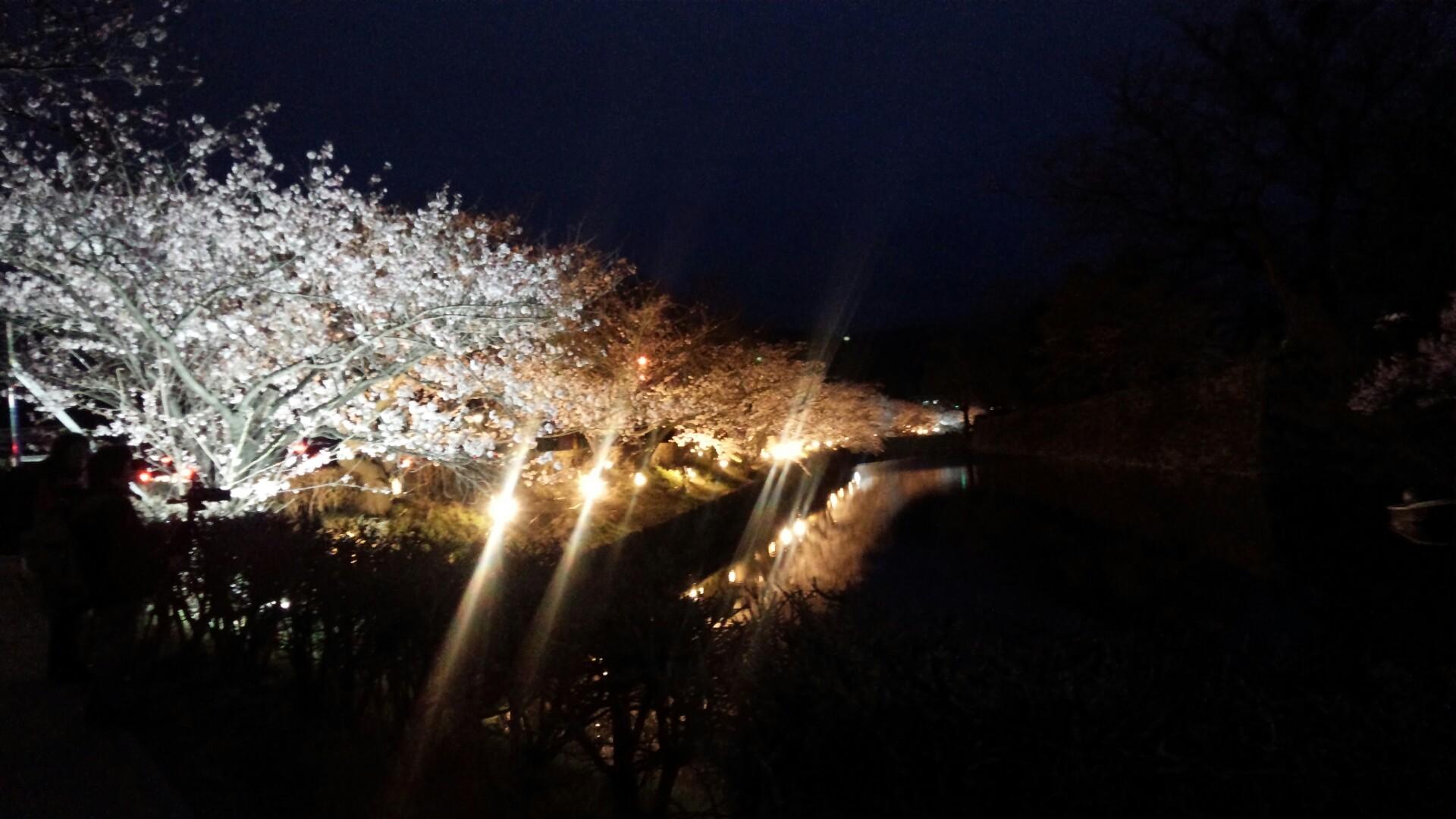 松本城の夜桜!!